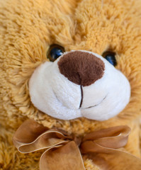 Teddy bear toy closeup