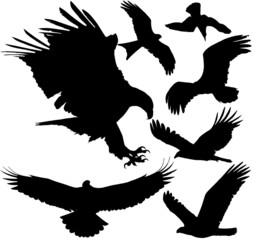Eagle, hawk, griffon vulture vector silhouettes