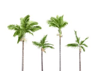 Plam trees on white