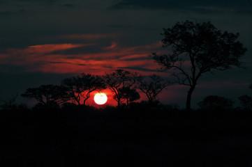 Sonnenuntergang in der Afrikanischen Savanne
