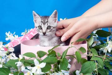 kitten in a box in flowers