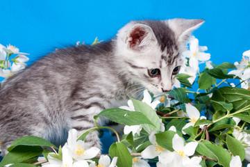 kitten sits in flowers