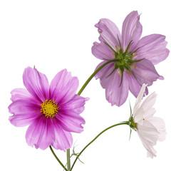 Spring garden beautiful flower