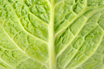 Backgrounds cabbage
