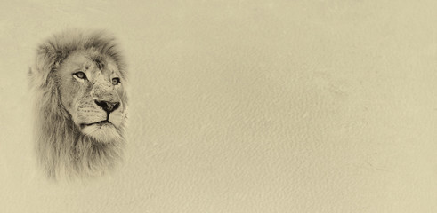 Sepia Toned Lion Face with Text Card Banner