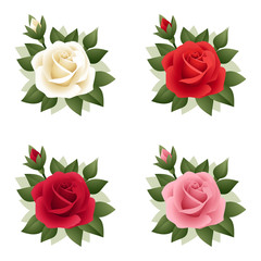Set of four roses of various colors. Vector illustration.