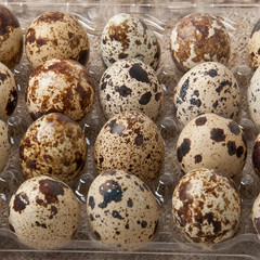 quail eggs in the container