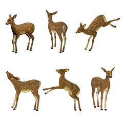 Fawn set, isolated on the white background