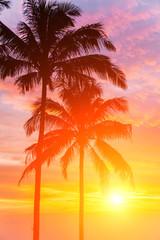 Two palm and beautiful sunset