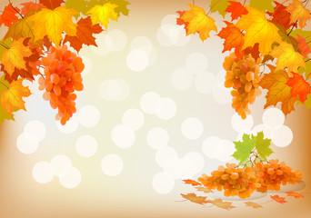 Autumn, grapes, postcard.