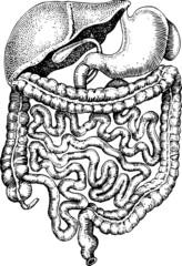 Vectorial illustration of internals of man