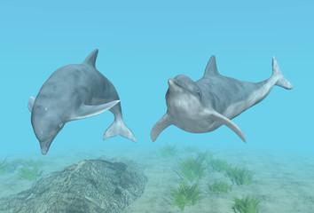 Tauchende Delfine