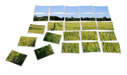 Fotopuzzle - Spuren im Kornfeld