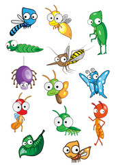 Collection of insect