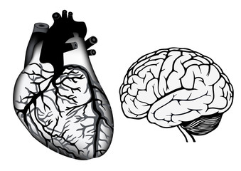 human heart and brain in black and white color
