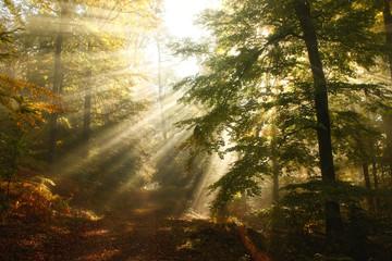 Sonnenstrahlen fallen durch Herbstliches Blätterdach im Wald