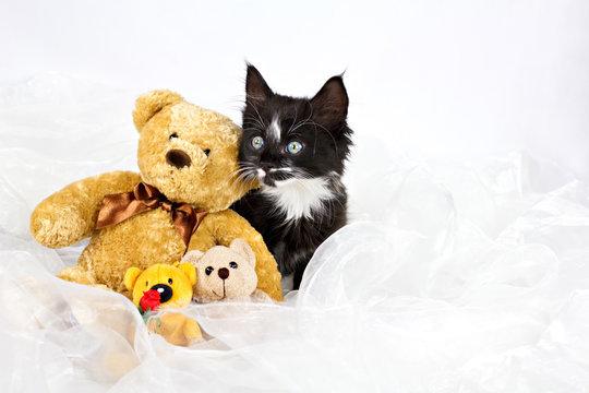 Kitten with teddy bears