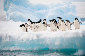 Spoed Foto op Canvas Antarctica Penguins on the snow