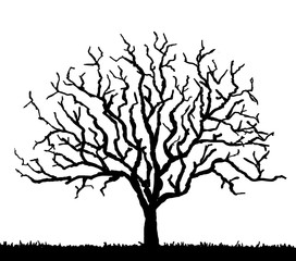 black tree silhouette with no leaves, vector illustration