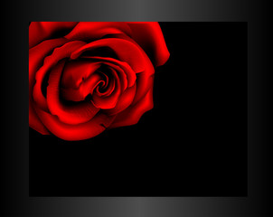Rose in frame