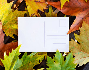 Empty postcard on autumn maple leaves background