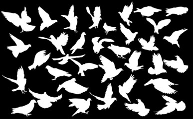 large set of pigeon white silhouettes