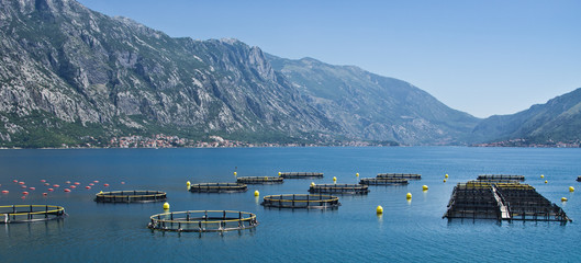 Coastal fish farming