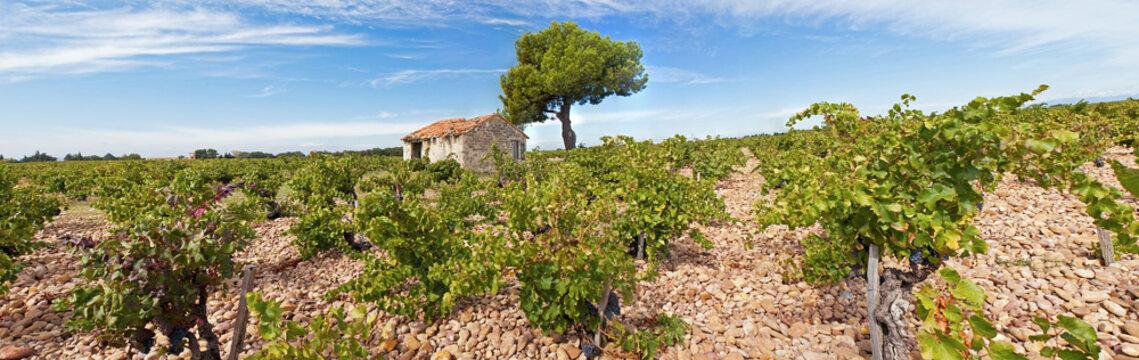 Cabanon dans un champ de vigne