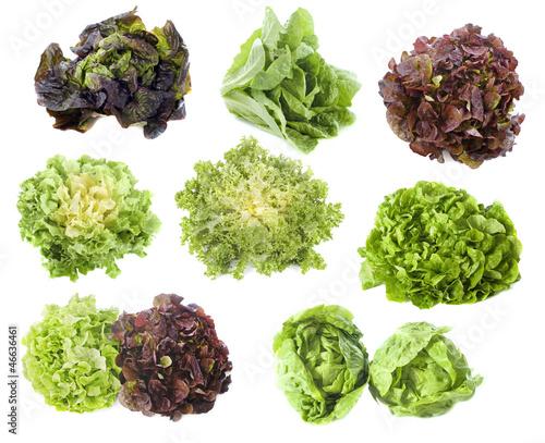 Vari t s de salades photo libre de droits sur la banque d 39 images image 46636461 - Salade d hiver variete ...