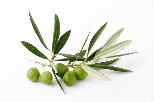Olive verdi e ramoscelli - Olive green and twigs