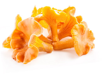 Fototapeta Edible wild mushroom chanterelle (Cantharellus cibarius) isolate obraz