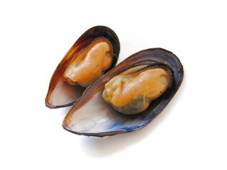 Isolated two mussels in their shells.