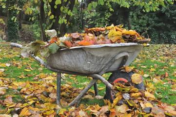 vieille brouette remplie de feuilles mortes