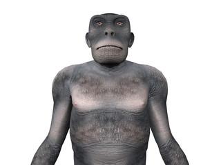 Homo Habilis - The Evolution of Man