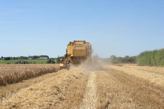 harverster harvesting wheat