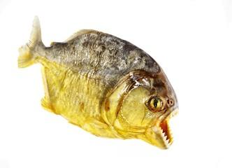 Piranha isolated
