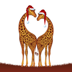Christmas giraffes, vector