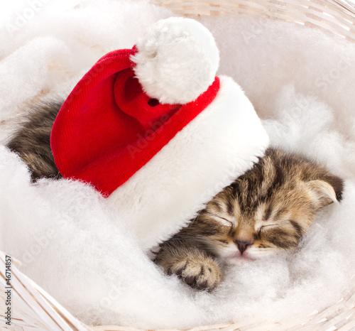 Котенок под шапкой без смс