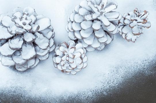 Pine cones with snow