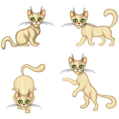 Kitten in different poses