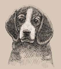 Dog artistic drawing