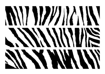 set of Zebra pattern vector