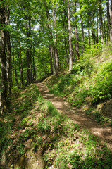 a path in Murbach forest in Alsace