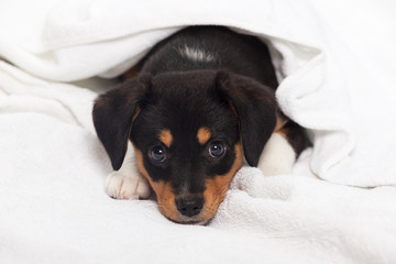 Little Dog on the Bed