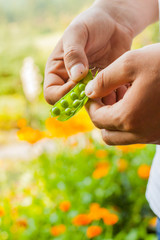 Showing green pea