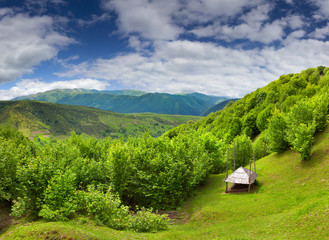 Landscape of the summer mountains with fresh green leaves