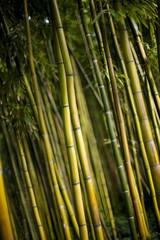 Wall Mural - Bambou, forêt, bosquet, jardin, bois, végétal, plante