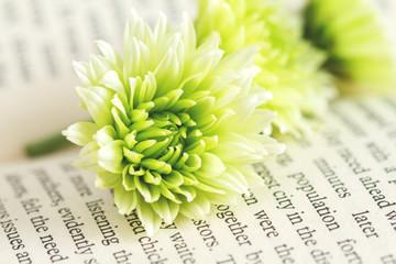 green chrysanthemum on the book