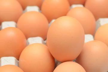 Eggs in a carton closeup view