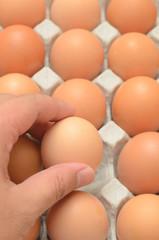 Hand select egg in carton